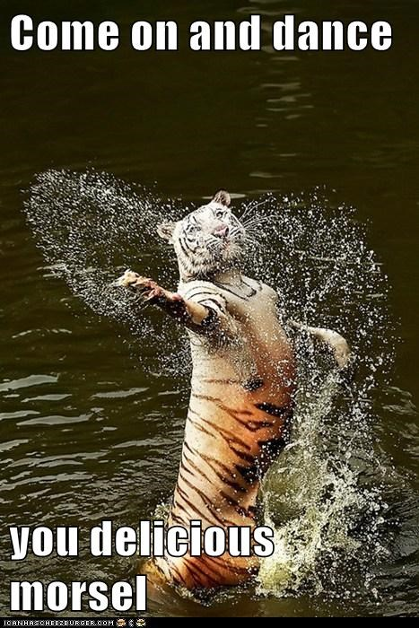 tigers,water,morsel,dance,delicious