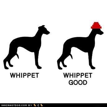 whippet,whip it,dogs,Devo,pun,song,hat