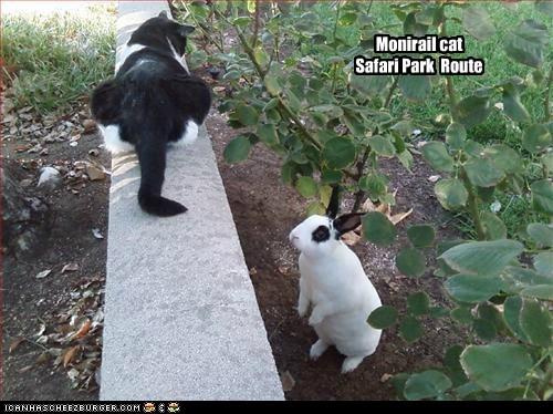 route monorail cat park sac safari - 6948851456