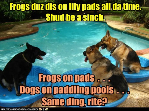 Frogs duz dis on lily pads all da time. Shud be a sinch. Frogs on pads . . . Dogs on paddling pools . . . Same ding, rite?