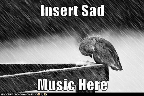 Sad Music birds insert rain