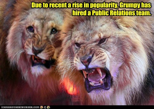lions,hired,grumpy,public relations,popularity,Grumpy Cat,pr