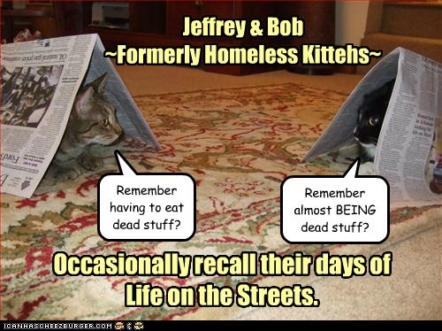 Jeffrey & Bob ~Formerly Homeless Kittehs~ Occasionally recall their days of Life on the Streets. Remember having to eat dead stuff? Remember almost BEING dead stuff?