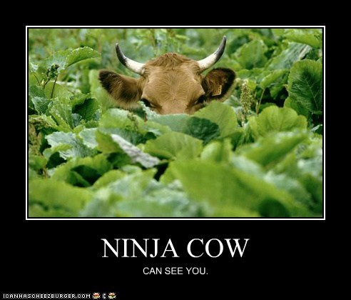 you ninja Staring angry watching cows