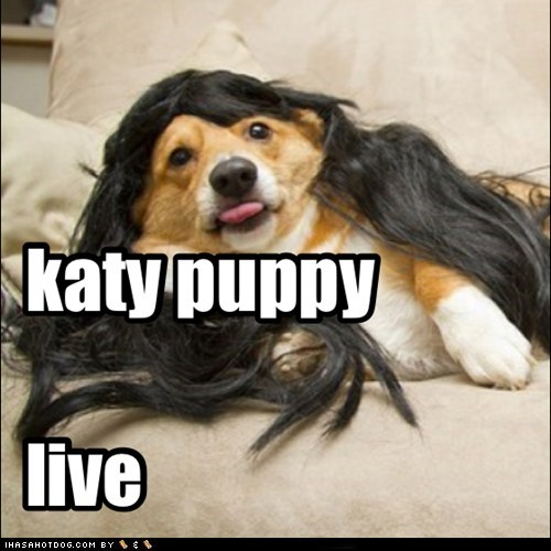 katy puppy