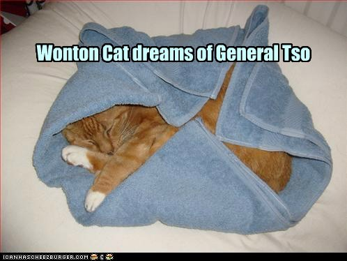 cat dream dreams sleep food funny - 6950003200
