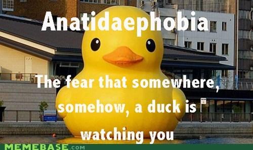 wtf,ducks,anatidaephobia