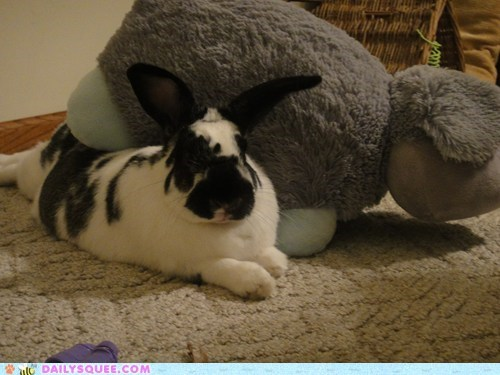 Bunday reader squee pets stuffed animal rabbit bunny squee - 6950661120