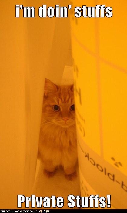 cat secret private funny - 6950876416