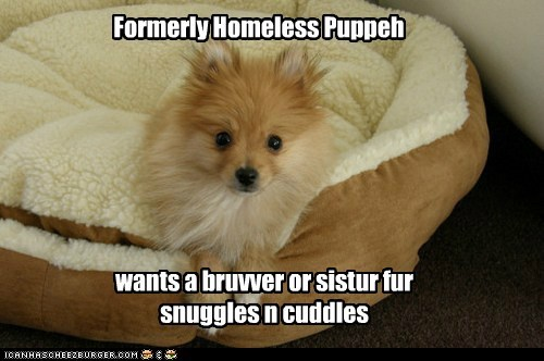 pomeranian borther dogs homeless dog bed cuddles sister rescue