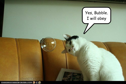cat,hypnosis,bubble,mind control,funny,obey