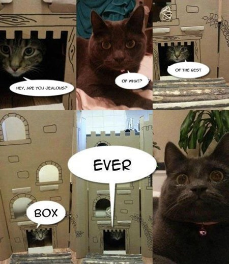 box,jealousy,Cats