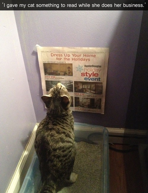 thoughtful,read,toilet,litter box,Cats