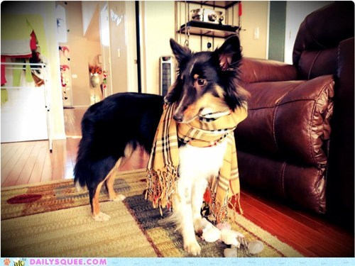 scarf,dogs,reader squee,pets,stylish,hipster,squee