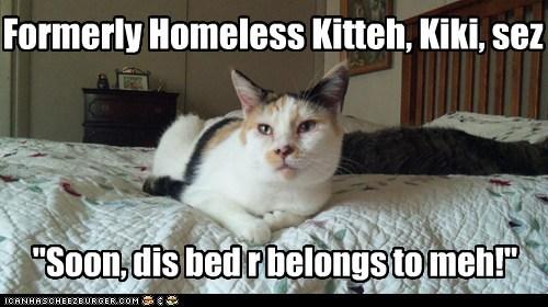 """Formerly Homeless Kitteh, Kiki, sez """"Soon, dis bed r belongs to meh!"""""""