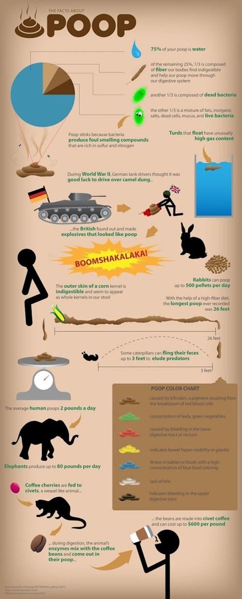 poop facts scoop bathroom infographic - 6952222464