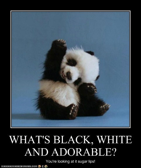 WHAT'S BLACK, WHITE AND ADORABLE?