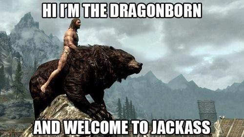 wtf,elder scrolls,bear,jackass,Skyrim