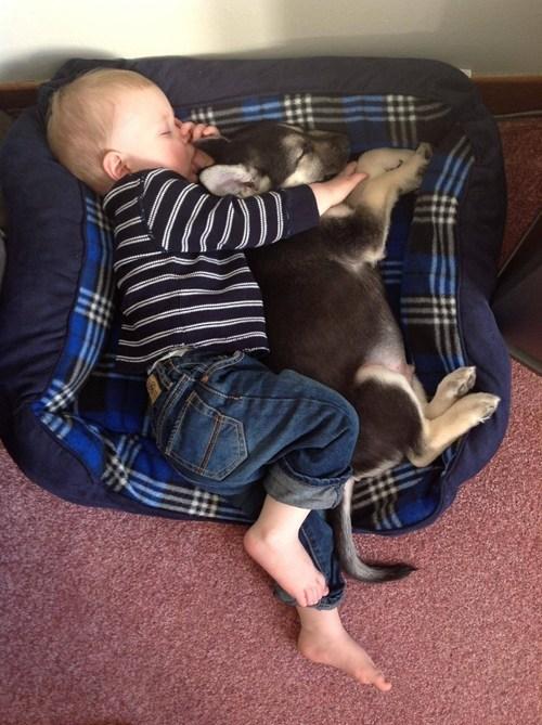 Babies daww dogs - 6952358912