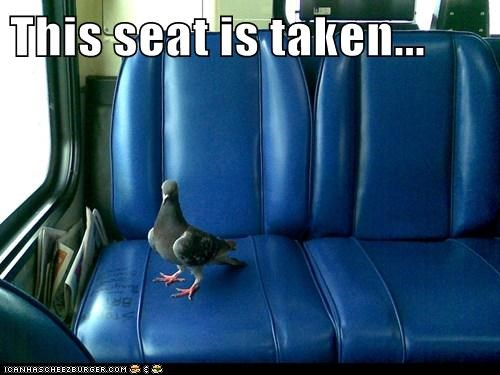 taken,riding,seat,pigeons,rude,bus