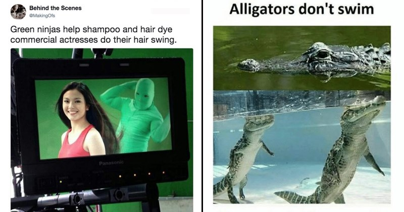 Surreal Memes | tweet by Behind Scenes @MakingOfs Green ninjas help shampoo and hair dye commercial actresses do their hair swing. pic of alligators standing on the bottom of a lake with their noses above water: Alligators don't swim