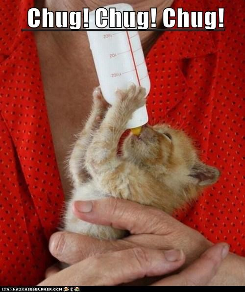 cat,chug,milk,kitten,kitty,animal,funny