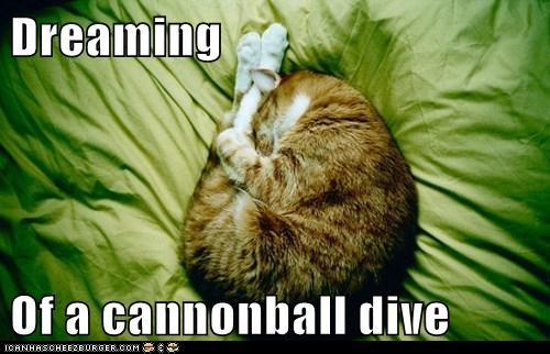 cat sports water dive Cats funny