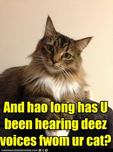 And hao long has U been hearing deez voices fwom ur cat?