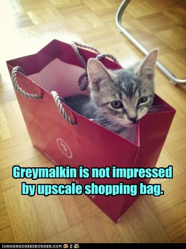 Greymalkin is not impressed by upscale shopping bag.