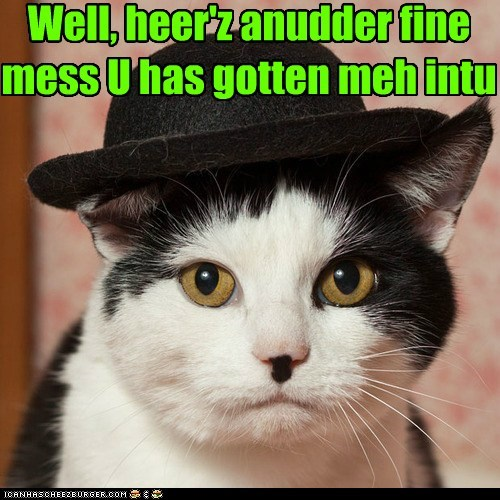 costume,cat,laurel and hardy,Cats,hat,funny