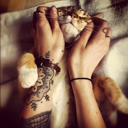 cyoot kitteh of teh day face rub tattoo Cats - 6952735744