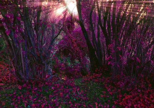 Forest flowers purple camping pretty colors