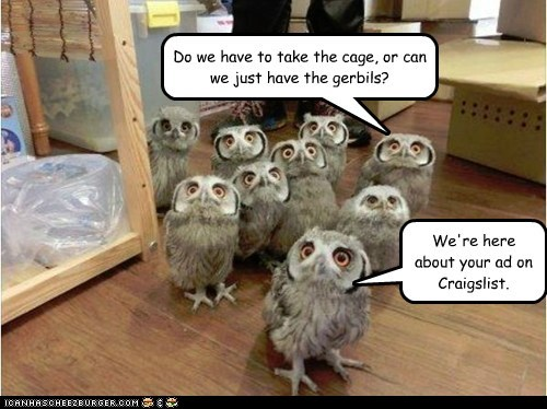 Funny Owl Meme of a owls showing up to get the free gerbils that were posted in Craigslist.