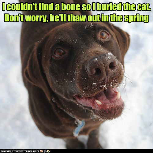 cat buried dogs labrador snow thaw winter