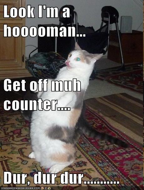impression human Cats - 6953184768