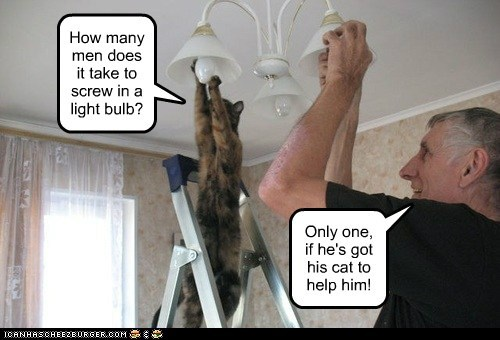 How many men does it take to screw in a light bulb? Only one, if he's got his cat to help him!