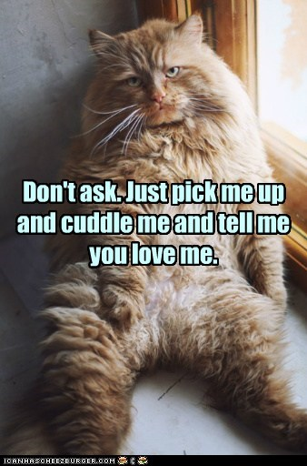 cat cuddle cuddles love funny hug - 6953213696
