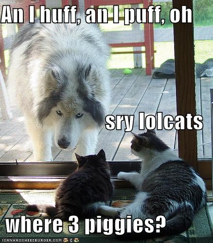 big husky lolcats lolwolves - 695467776