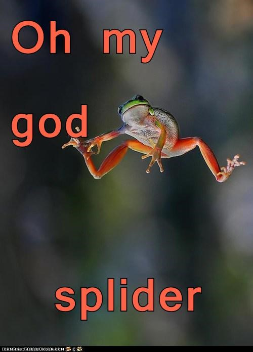 spider oh my god scared jumping frogs - 6954990080