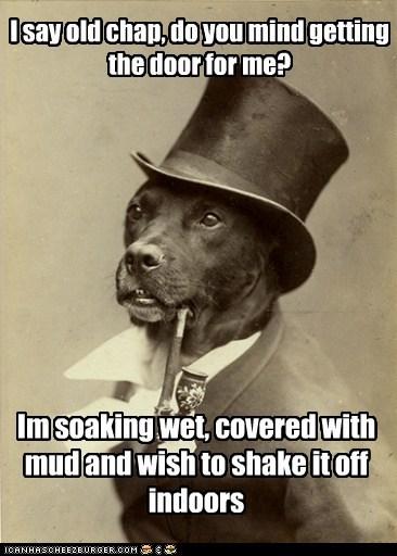 dogs pets mud old money dog - 6954991360