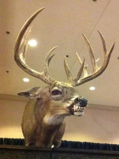 deer taxidermy nightmares americana
