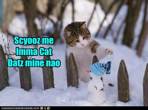 snow,Cats,hat,snowman