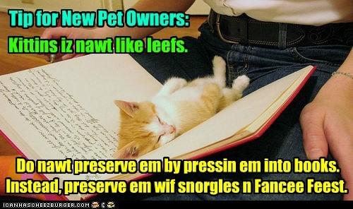 Tip for New Pet Owners: Do nawt preserve em by pressin em into books. Instead, preserve em wif snorgles n Fancee Feest. Kittins iz nawt like leefs.