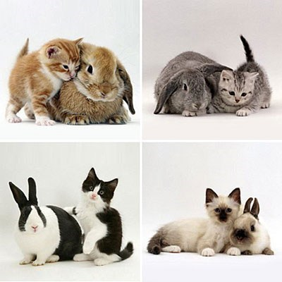 bunnies,Interspecies Love,matching,Cats,squee,rabbits
