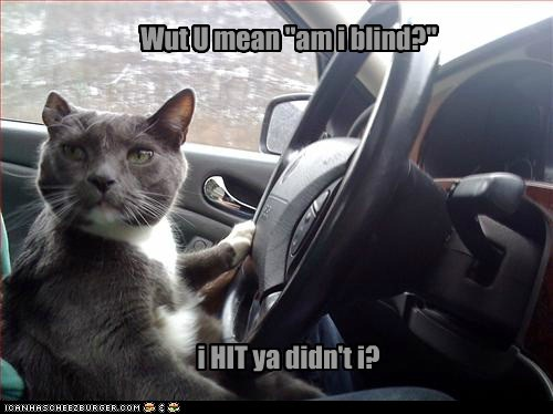 rage cat car road rage driving Cats funny - 6955561984