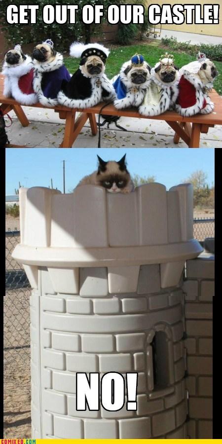 costume pugs Grumpy Cat - 6955602432