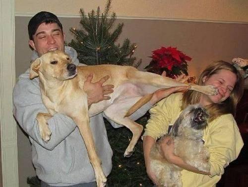kick dogs pets laughing lmao - 6955739648