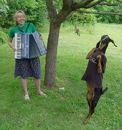 polka Music goat accordion dance