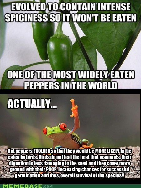 peppers factual frog frog - 6956089856