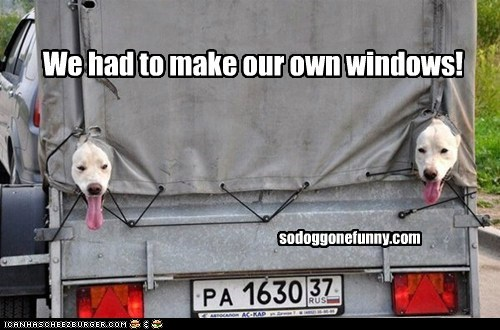 We had to make our own windows! sodoggonefunny.com